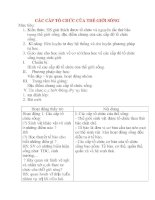 Giáo án Sinh Học lớp 10: CÁC CẤP TỔ CHỨC CỦA THẾ GIỚI SỐNG potx