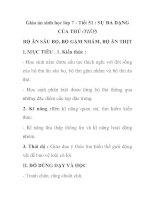 Giáo án sinh học lớp 7 - Tiết 51 : SỰ ĐA DẠNG CỦA THÚ (TIẾP) BỘ ĂN SÂU BỌ, BỘ GẶM NHẤM, BỘ ĂN THỊT ppt