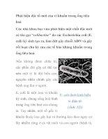 Phát hiện độc tố mới của vi khuẩn trong ống tiêu hoá pdf