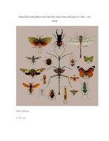 Sáng kiến kinh nghiệm môn tìm hiểu môi trường mẫu giáo 4-5 tuổi – côn trùng pps