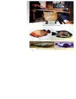 Kỹ thuật sản xuất giống và nuôi cá rô phi đạt tiêu chuẩn vệ sinh an toàn thực phẩm part 6 potx