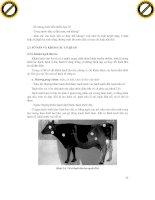 Giáo trình hướng dẫn phân tích và chẩn đoán bệnh thú nuôi từ các triệu chứng báo trước phần 3 ppsx