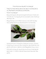 13 lợi ích bạn chưa từng biết về cây húng quế pot