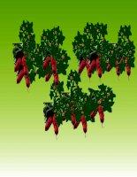 Giáo trình điện tử mầm non: Sự tích cây khoai lang docx