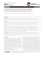 Involvement of p63 in the herpes simplex virus-1-induced demise of corneal cells Research ppt