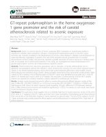 GT-repeat polymorphism in the heme oxygenase1 gene promoter and the risk of carotid atherosclerosis related to arsenic exposure ppt