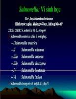 Giáo án điện tử môn sinh vật học: Samonella(Vi Sinh Học) ppt