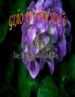 giáo án bồi dưỡng sinh học 6 có phải tất cả thực vật đều có hoa