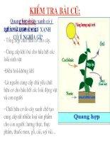 Bài giảng điện tử môn sinh học: Sự hô hấp của cây docx
