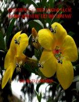 Bài giảng điện tử môn sinh học: Cấu tạo của lá cây doc