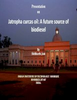 Jatropha curcas oil: A future source of  biodiesel