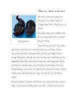Món ăn - thuốc từ hà thủ ô pdf