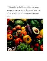 Tránh để trái cây lẫn rau củ khi bảo quản pot