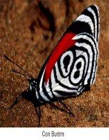 Giáo án mầm non chủ đề trẻ làm quen với côn trùng qua hình ảnh