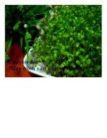 Chuyên đề quy trình sản xuất rau mầm