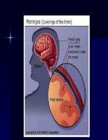 Bài giảng về viêm màng não mủ