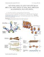 Kỹ năng giải các bài tập liên quan đến cấu trúc phân tử DNA, RNA, protein  giảm phân, nguyên phân
