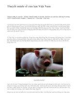 Thuyết minh về con lợn Việt Nam - văn mẫu