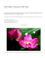 Giới thiệu về hoa sen Việt Nam - văn mẫu