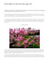 Giới thiệu về cây hoa đào ngày tết - văn mẫu
