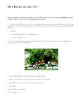 Dàn bài tả cây me lớp 4 - văn mẫu