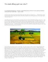 Tả cánh đồng quê em văn 5 - văn mẫu