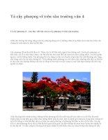 Tả cây phượng vĩ trên sân trường văn 4 - văn mẫu