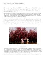 Tả mùa xuân trên đất Bắc - văn mẫu