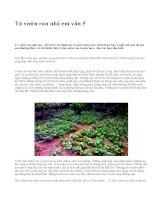 Tả vườn rau nhà em văn 5 - văn mẫu