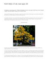 Giới thiệu về cây mai ngày tết - văn mẫu