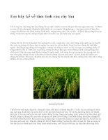 Em hãy kể về tâm tình của cây lúa - văn mẫu