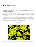 Giới thiệu về hoa cúc - văn mẫu