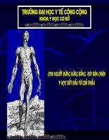 Bài giảng mở đầu về giải phẫu người