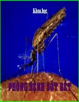 12. Phòng bệnh sốt rét
