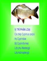 Tiết 34 Thực hành mổ cá chép