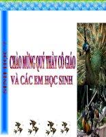 bài 35 ếch Đồng