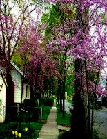 bài 12: trang trí nhà ở bàng cây cảnh và hoa
