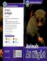 animals at night 4