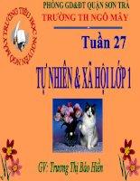 Bài 27. Tự nhiên xã hội: Con mèo