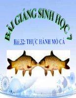 bài giảng sinh học 7 bài 32 thực hành mổ cá