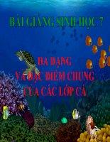 bài giảng sinh học 7 bài 34 đa dạng và đặc điểm chung của các lớp cá