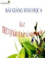 bài giảng sinh học 6 bài 47 thực vật bảo vệ đất và nguồn nước