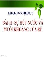bài giảng sinh học 6 bài 11 sự hút nước và muối khoáng của rễ