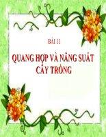 bài giảng sinh học 11 bài 11 quang hợp và năng suất cây trồng