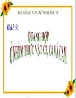 bài giảng sinh học 11 bài 9 quang hợp ở các nhóm thực vật c3, c4 và cam