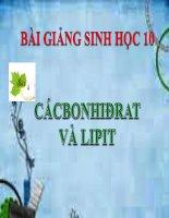 bài giảng sinh học 10 bài 4 cacbonhiđrat va lipit