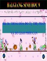 bài giảng sinh học 9 bài 34 thoái hóa do tự thụ phấn và do giao phối gần