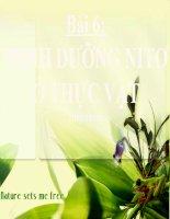 bài giảng sinh học 11 bài 6 dinh dưỡng nitơ ở thực vật (tiếp theo)
