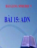 bài giảng sinh học 9 bài 15 adn