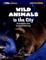 wild animals in the city